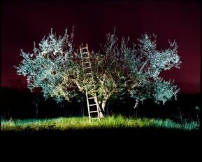 "Nicolas Lalau, "" Nocturnal in Sabina"""